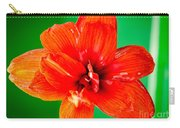 Amaryllis Contrast Orange Amaryllis Flower Appearing To Float Above A Deep Green Background Carry-all Pouch