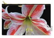 Amaryllis On Black Carry-all Pouch