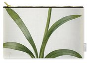 Amaryllis Vittata Carry-all Pouch by Pierre Redoute