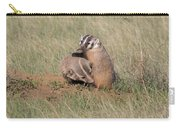 American Badger Cub Climbs On Its Mother Carry-all Pouch
