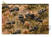 Ant Crematogaster Sp Group Carry-all Pouch