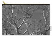 Arizona Sycamore Tree Filtered 022714 Carry-all Pouch