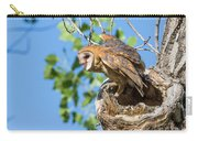 Barn Owl Owlet Climbs Out Of Nest Carry-all Pouch