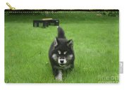 Beautiful Bold Two Month Old Alusky Puppy Dog Carry-all Pouch