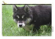 Beautiful Furry Black And White Alusky Only Two Months Old  Carry-all Pouch