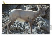 Bighorn Sheep Lamb Carry-all Pouch