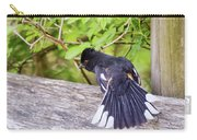 Bird Behavior - Eastern Towhee Fans His Tail Carry-all Pouch
