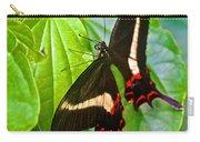 Black Swallowtail Butterfly In Iguazu Falls National Park-brazil  Carry-all Pouch