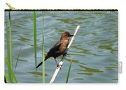 Boat Tailed Grackle Female Carry-all Pouch