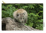 Bobcat Kitten Exploration Carry-all Pouch by Sandra Bronstein