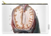 Brain, Anatomical Illustration, 1802 Carry-all Pouch