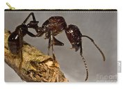 Bullet Ant Carry-all Pouch