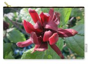 Calycanthus  Carry-all Pouch