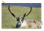 Caribou Resting In Tundra Grass Carry-all Pouch
