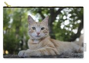 Cat Volterra Italy Carry-all Pouch