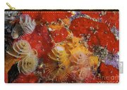 Christmas Tree Worms, Bonaire Carry-all Pouch