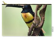 Collared Aracari Pteroglossus Carry-all Pouch