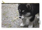 Concern On The Face Of An Alusky Puppy Carry-all Pouch