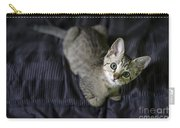 Curious Kitten Carry-all Pouch