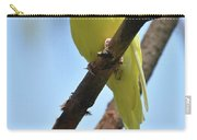 Cute Little Parakeet Resting On A Branch Carry-all Pouch