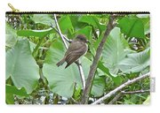 Eastern Phoebe - Sayornis Phoebe  Carry-all Pouch