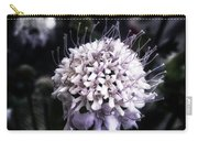 Field Scabious. A Member Of The Carry-all Pouch