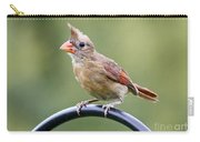 Friendly Female Cardinal  Carry-all Pouch