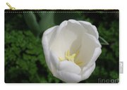 Gorgeous Blooming White Tulip Flower Blossom In Spring Carry-all Pouch