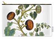 Gourd, 1735 Carry-all Pouch