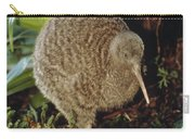 Great Spotted Kiwi Apteryx Haastii Male Carry-all Pouch by Tui De Roy