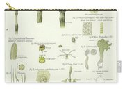 Horse Tail And Pillwort Carry-all Pouch