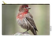 House Finch Perched On Cactus  Carry-all Pouch