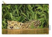 Jaguar Approaches Cayman Carry-all Pouch