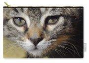 Kitten Curiosity Carry-all Pouch
