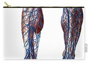 Leg Blood Vessels, Anatomical Carry-all Pouch