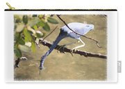 Little Blue Heron Going For Fish With Framing Carry-all Pouch