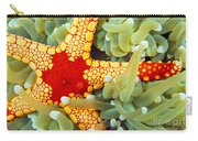 Marine Life, Close-up Carry-all Pouch
