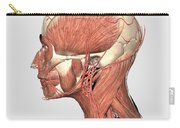 Medical Illustration Showing Human Head Carry-all Pouch