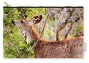Mule Deer Foraging On Pine On A Colorado Spring Afternoon Carry-all Pouch