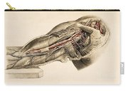 Muscles And Blood Vessels In Arm, 1851 Carry-all Pouch