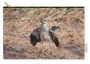 Northern Mockingbird Carry-all Pouch