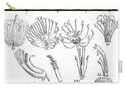 Plant Sexual Systems, Carl Linnaeus Carry-all Pouch