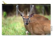 Portrait Of A Beautiful Buck  Carry-all Pouch