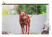 Portrait Of Red Miniature Pinscher Dog Carry-all Pouch