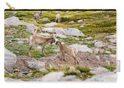 Practicing Baby Bighorn Sheep On Mount Evans Colorado Carry-all Pouch