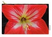 Red Amaryllis Carry-all Pouch