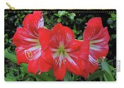 Red Amaryllis Trio Carry-all Pouch
