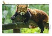 Red Panda Ailurus Fulgens Jerez De La Frontera Spain Carry-all Pouch
