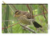 Redwing Blackbird - Immature Carry-all Pouch