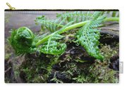 Redwood Tree Forest Fern Art Prints Ferns Giclee Baslee Trouman Carry-all Pouch